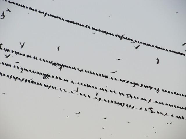 ptáci na drátech