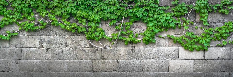 plot s rostlinami